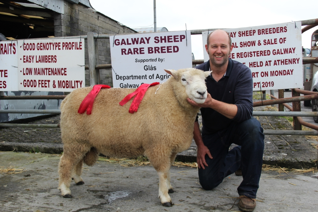 Raymond Casey Ballyvaughen Co. Clare had the Champion Hogget Ram.
